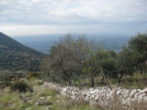 OLIVETO BASSIANO