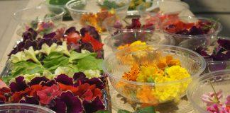 i fiori Hortives