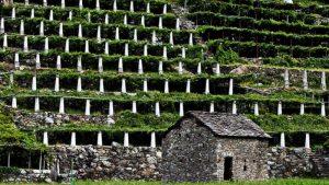 vigneti e terrazzamenti a DOnna Valle d'Aosta Nebbiolo