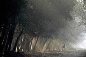 bosco mesola