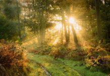 luce-nel-bosco