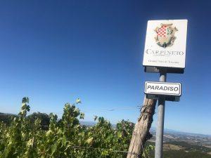 Carpineto Montalcino-Vigneto PARADISO