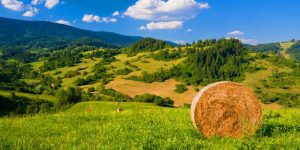 distretti_bio_agricoltura_di_montagna