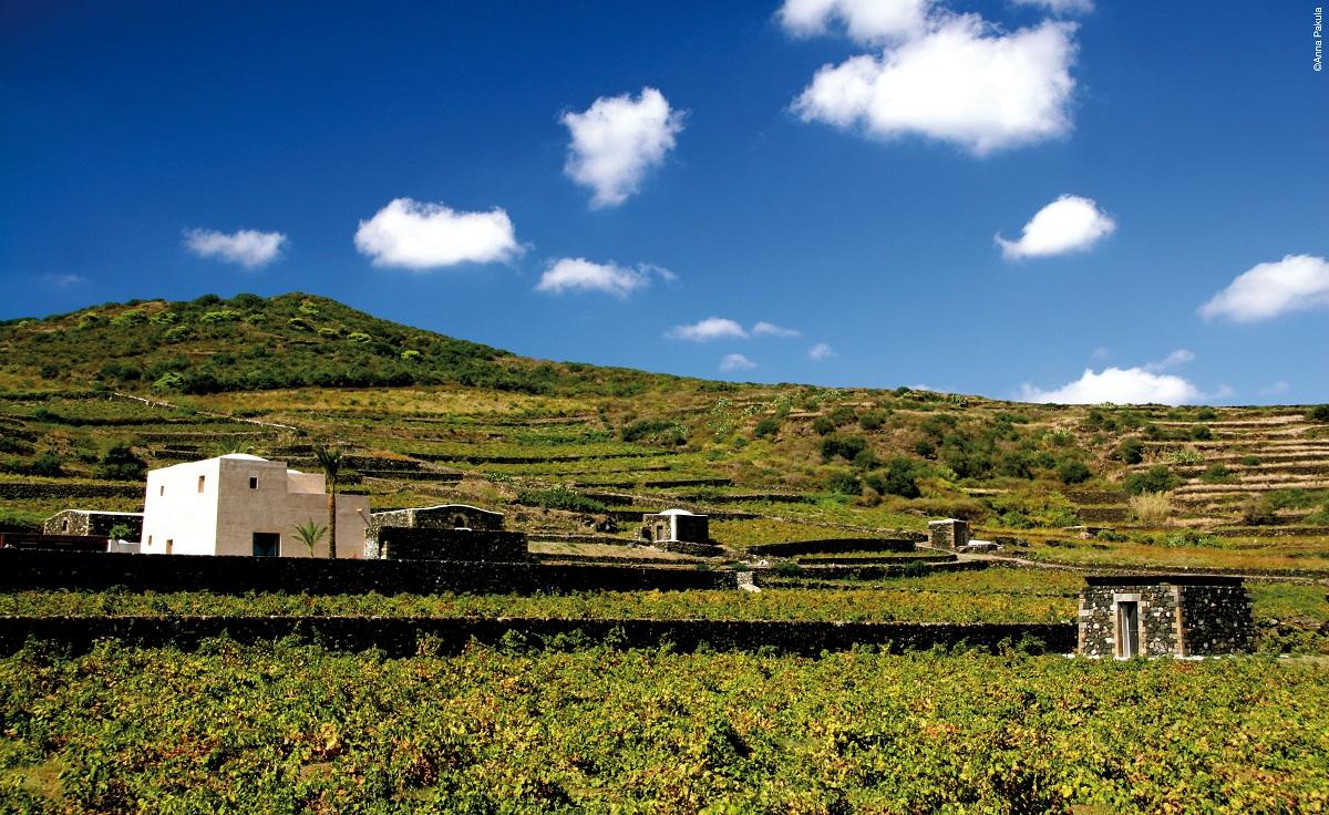 Cantina Donnafugata a Pantelleria. Credits: Ph. Anna Pakula