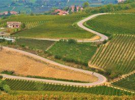 Strade di Langa. Credits: Ph. Andrea Di Bella