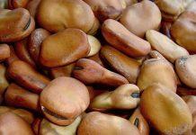 Macco-di-fave-legumi-secchi