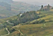 Paesaggio del vino delle Langhe. Credits: Ph. Andrea Di Bella