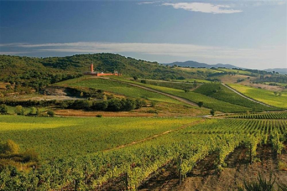 Cantina Rocca di Frassinello. Credits: Ph. MTV della Toscana