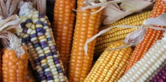 Salviamo la Biodiversità. Credits: Ph. www.fondazioneslowfood.com