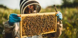 le-api-di-relais-chateaux