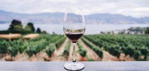 la-riserva-vini-bio-piceno
