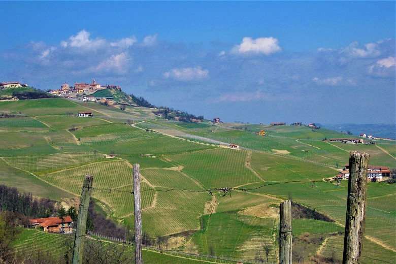 Paesaggio di vino in Piemonte. Credits ph. Andrea Di Bella