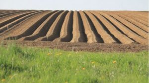 agricoltura-assobio