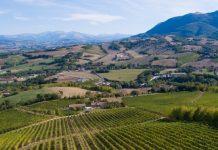 Dalle Marche con sapore: Go Wine porta a Bologna i vini piceni